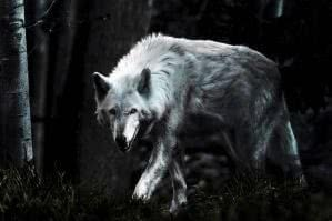 HD Dark Wolf Wallpapers