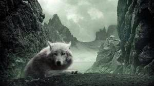 Wolf HD Wallpapers Cave