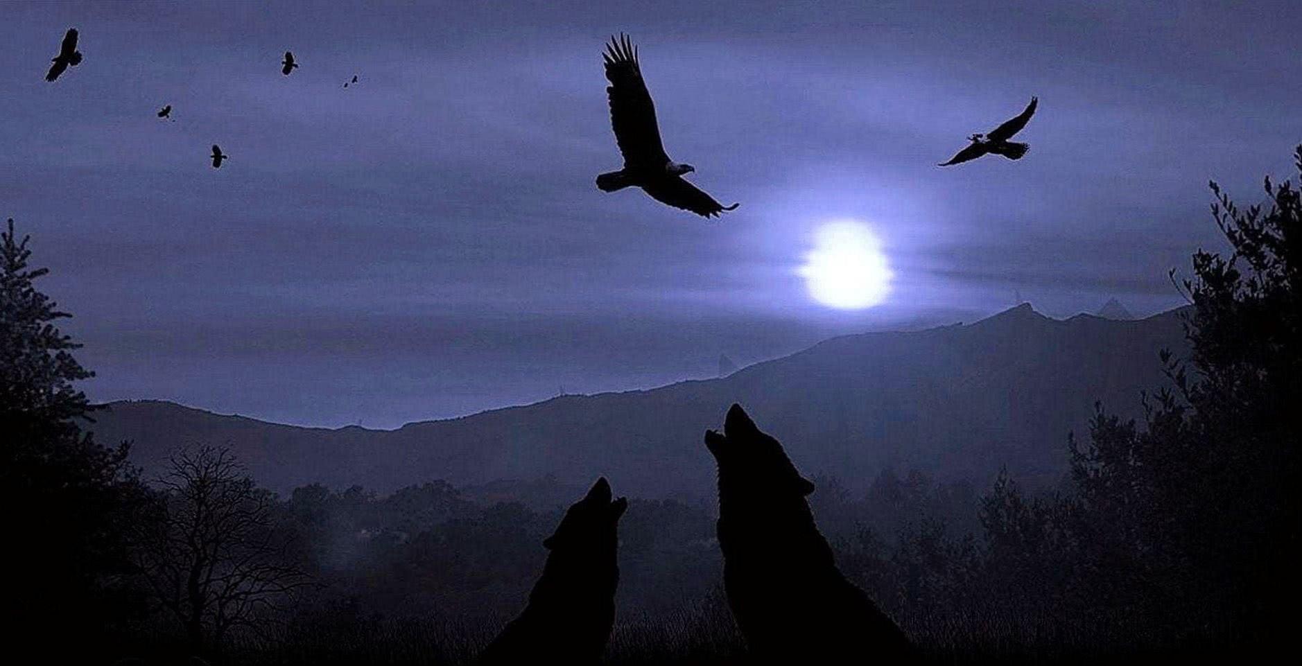 Dark Night Wolf Wallpaper