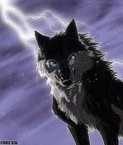 Anime Wolf Wallpapers Black