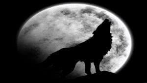 Wallpapers Wolf Mond