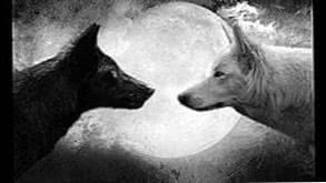 Black Wolf And White Wolf Wallpapers