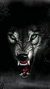Angry Wolf Wallpapers For Android
