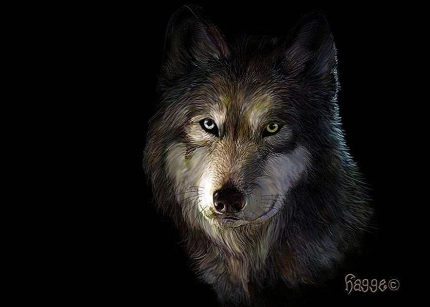 Wallpaper Of Wolf Head