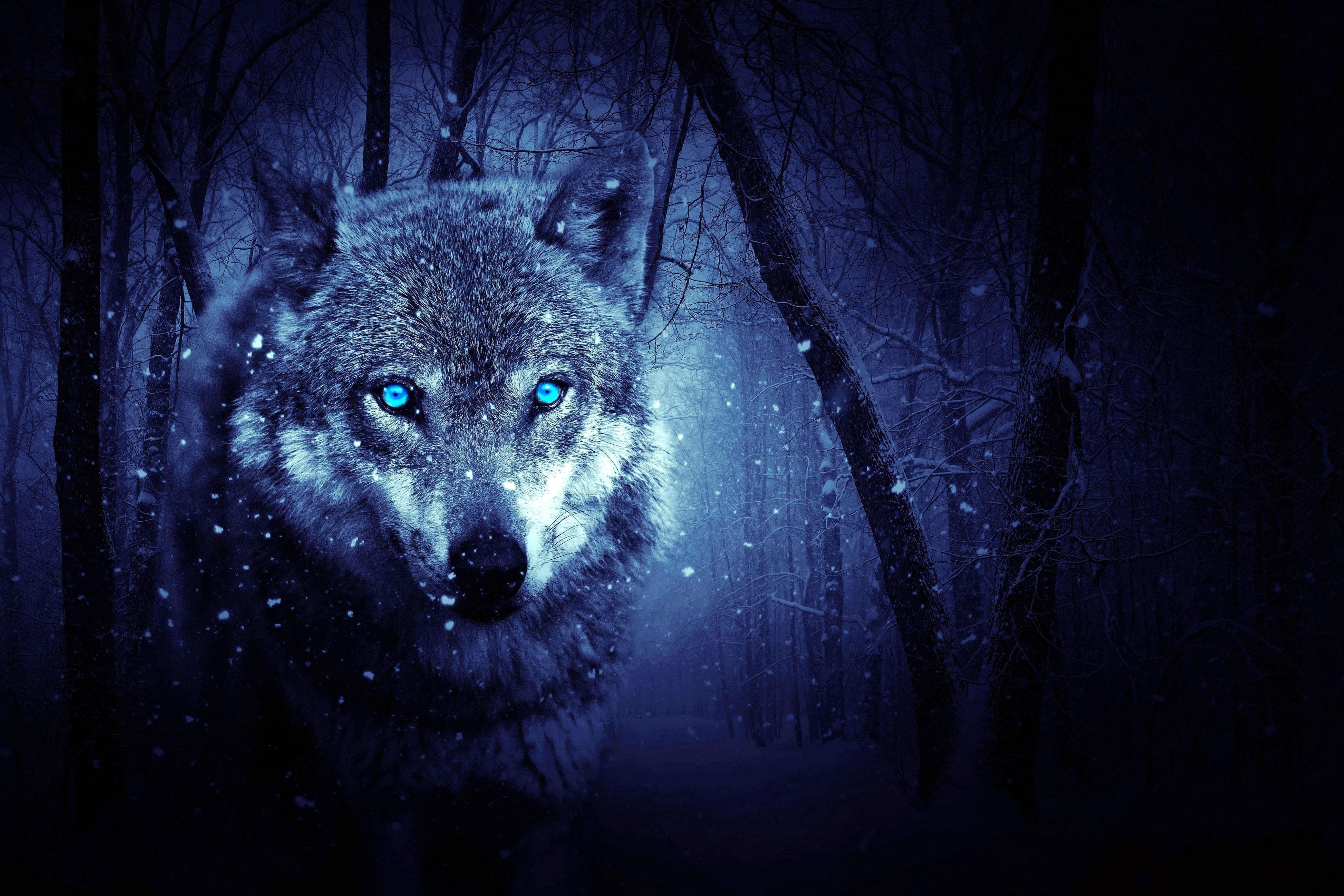 5k Wolf Wallpaper