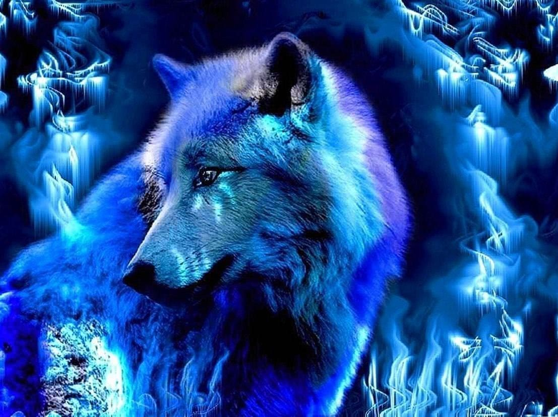 Wallpapers HD Blue Wolf