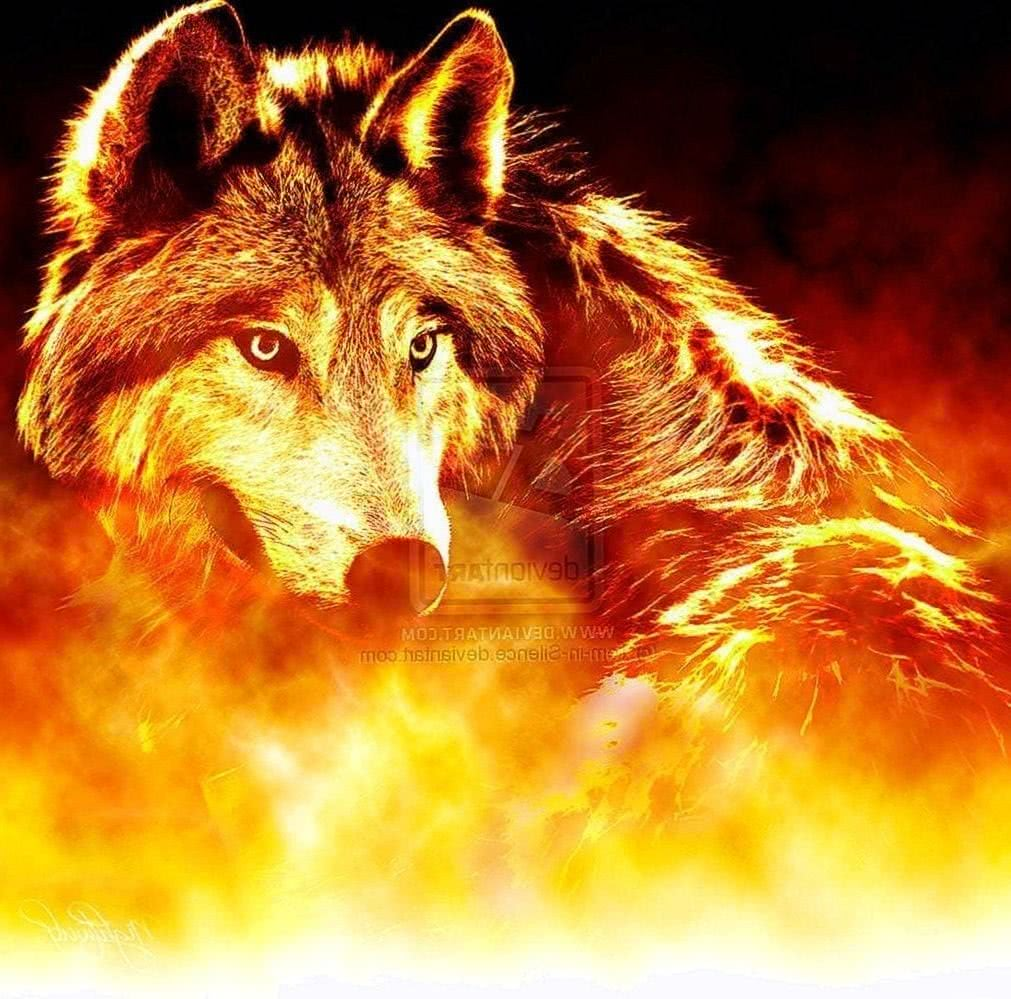 Wallpaper Fire Wolf