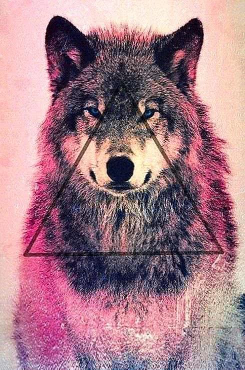 Cute Wolf Family Wallpaper