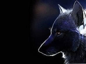 Dark Wolf Wallpapers Celular