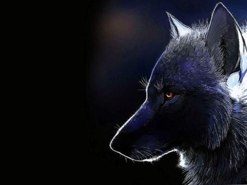 Dark Wolf Wallpaper Celular