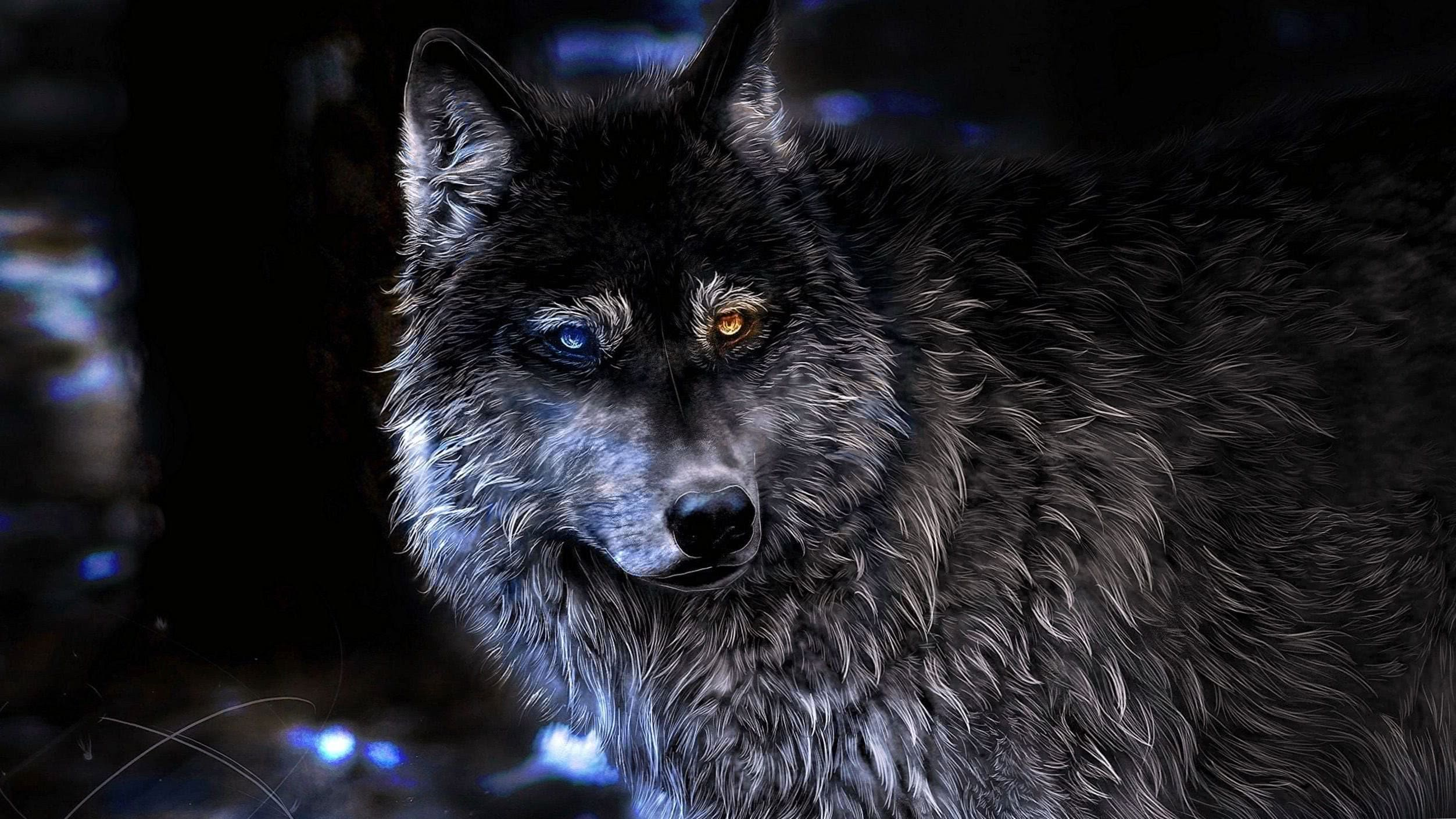 Wolf Wallpapers 2560x1440