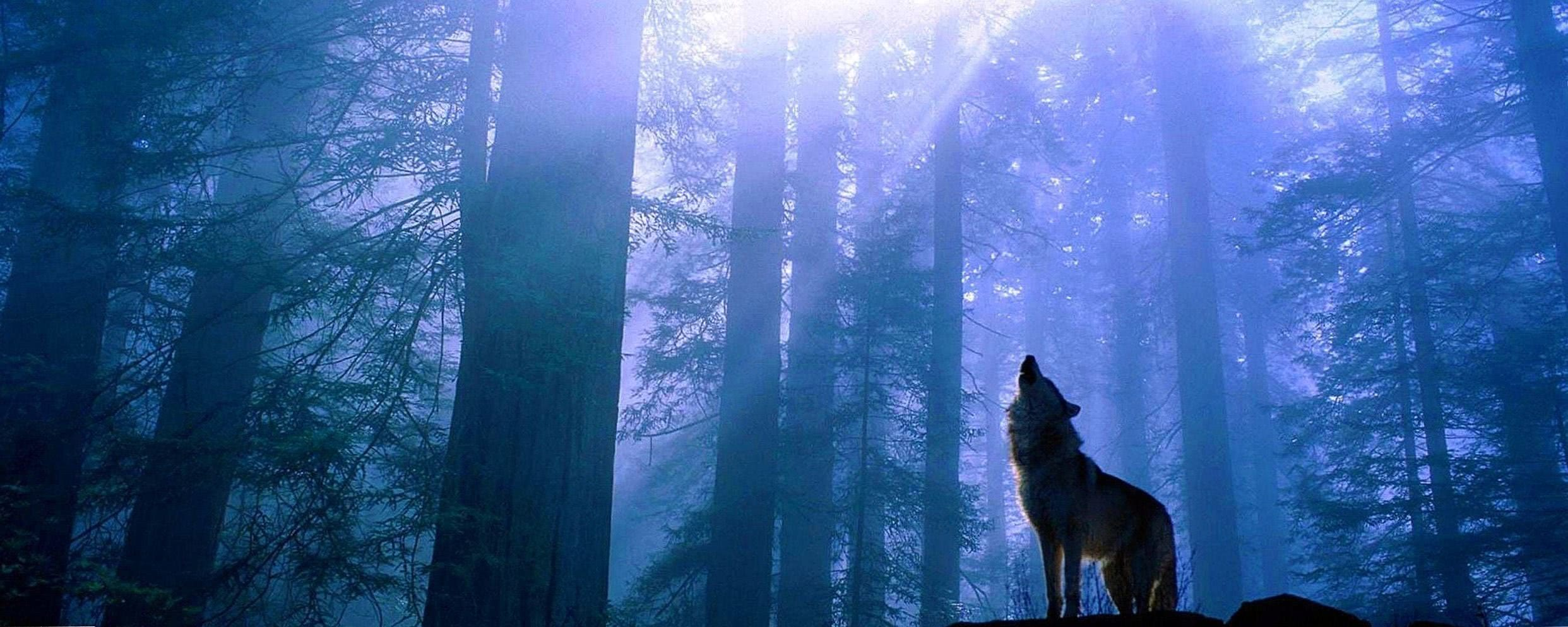 Dual Screen Wallpapers Wolf Wolf Wallpaperspro