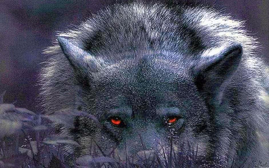 Wolf Eye HD Wallpapers