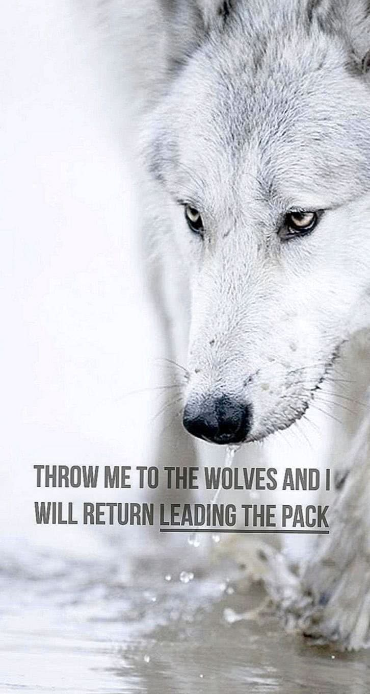 Wolf Quotes Wallpaper HD