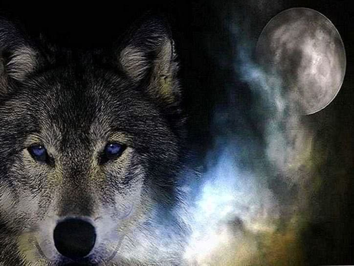 Wolf Wallpapers And Screensavers