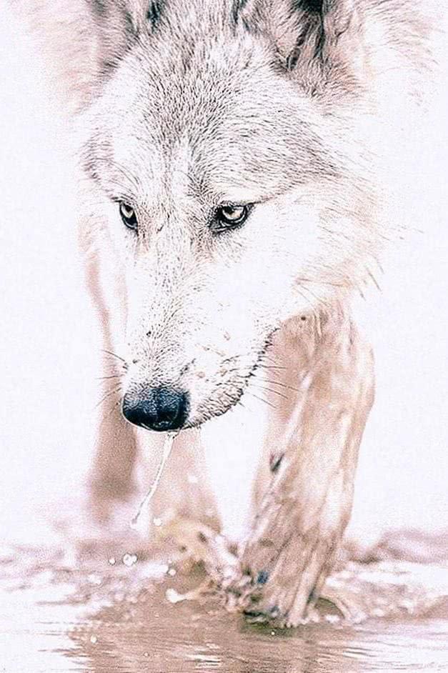 Wolf Wallpaper HD iPhone 7