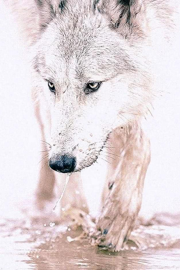 Wallpapers Wolf White