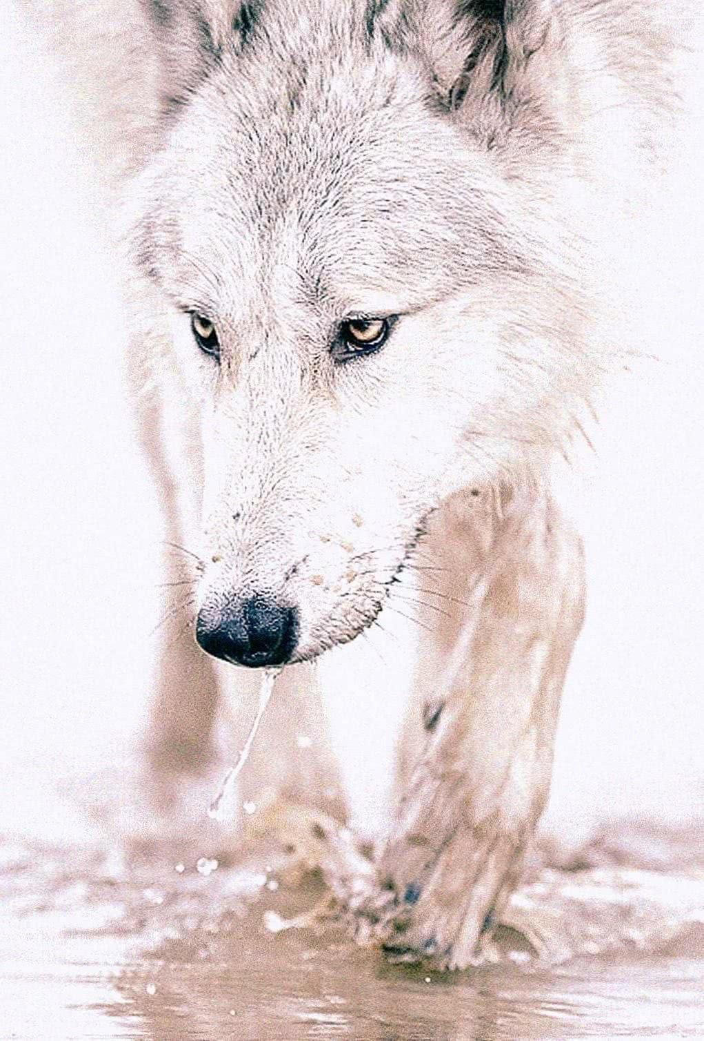 Wallpapers Wolf iPod