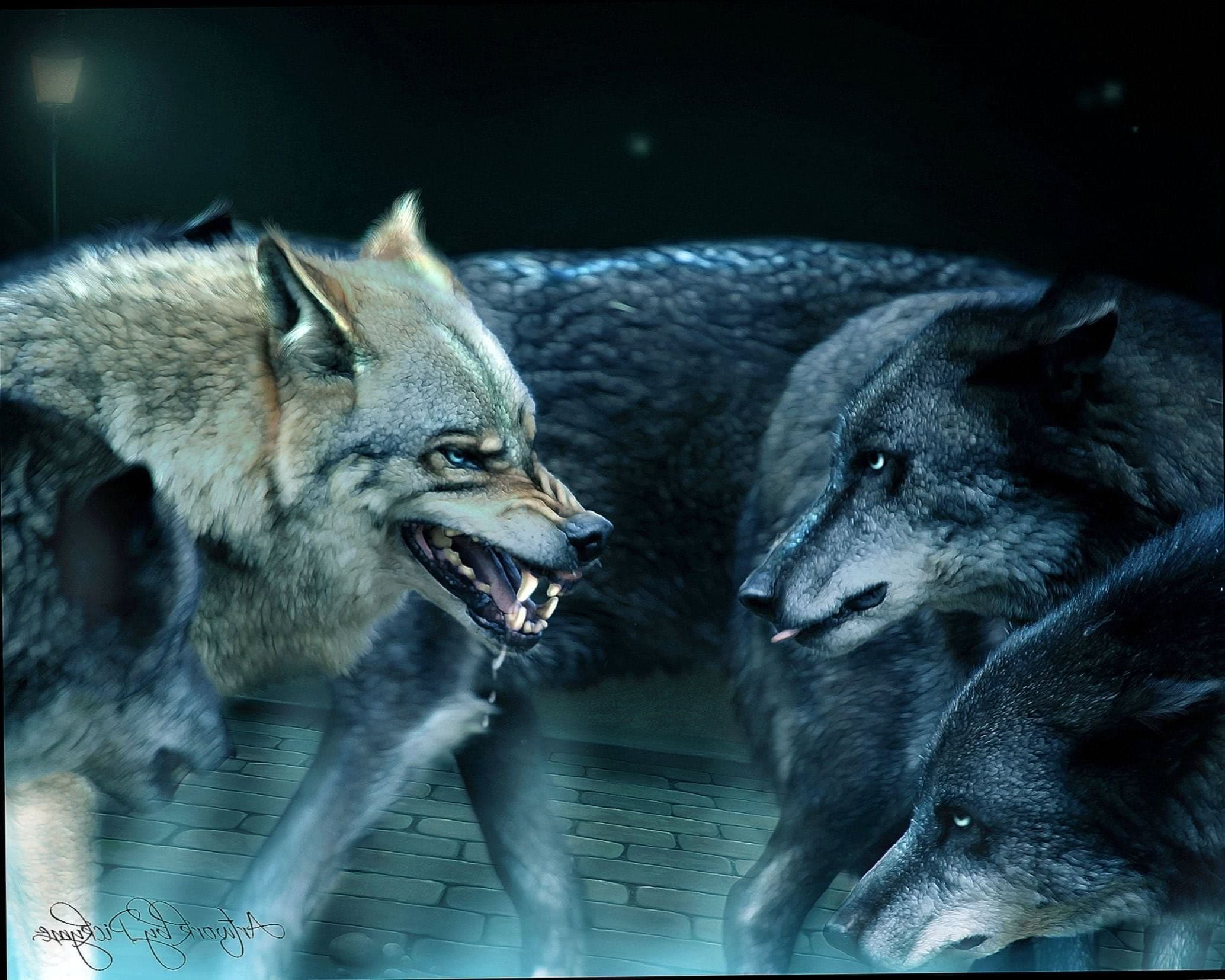 Wolf Alpha Male Wallpapers
