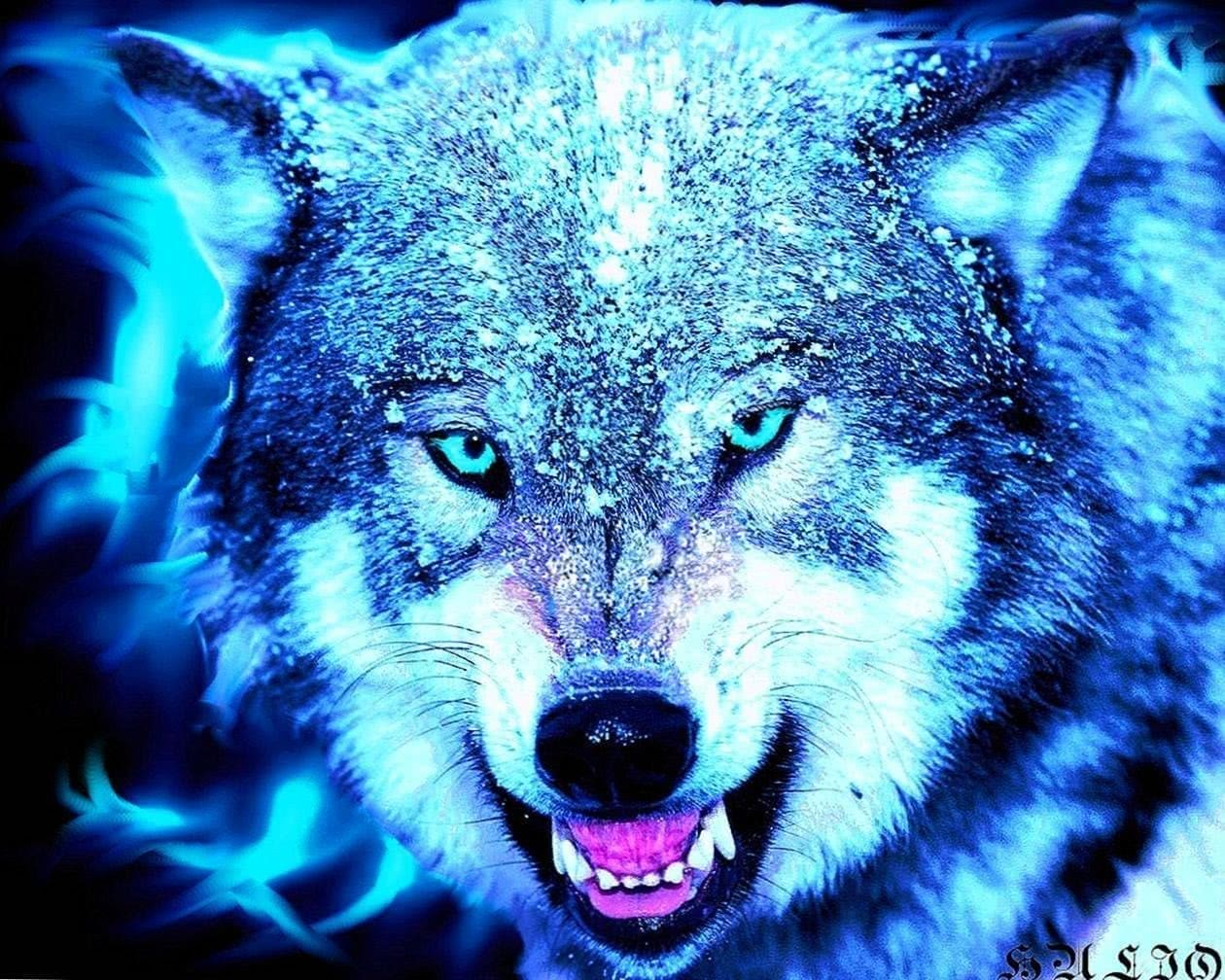 HD Wallpaper For Android Wolf