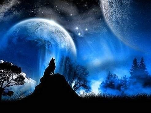 Wolf Full Moon Wallpaper