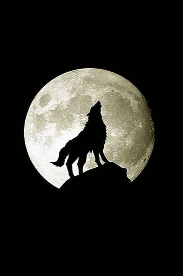 Wolf And Moon iPhone Wallpaper