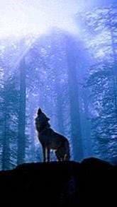 Wolf Wallpapers Lockscreen
