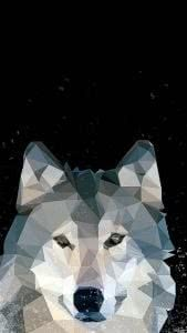 Gray Wolf iPhone Wallpapers