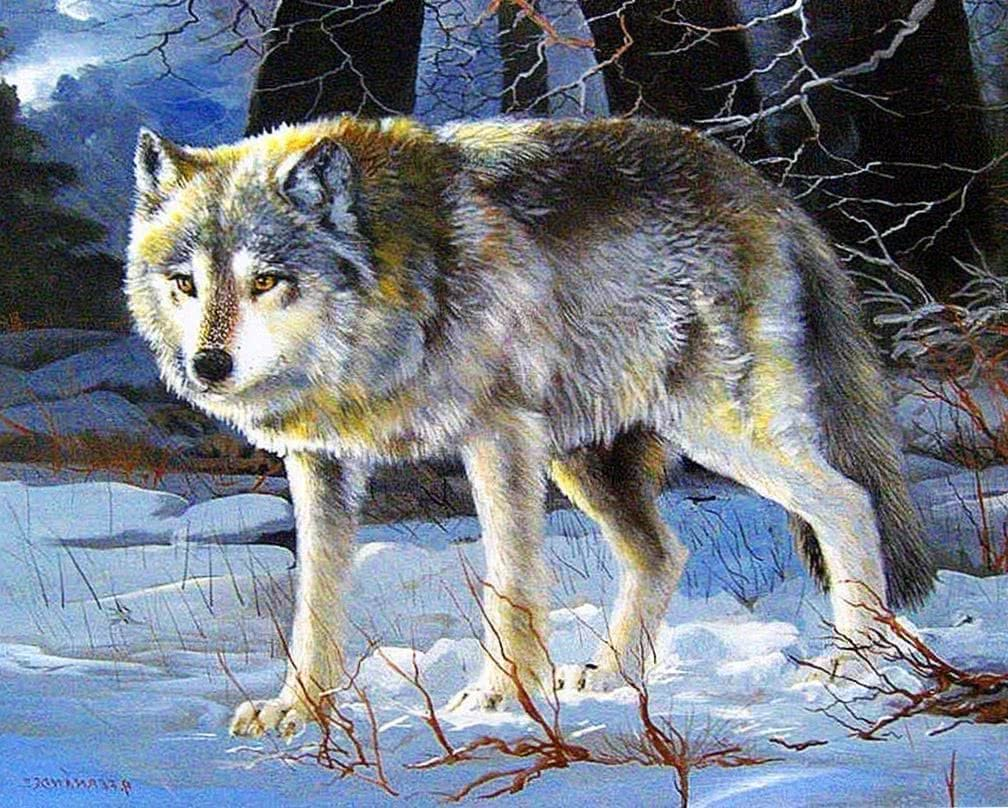 Grey Wolf Wallpapers HD