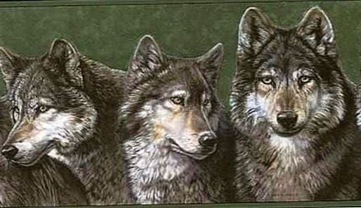Wolves Wallpapers Border