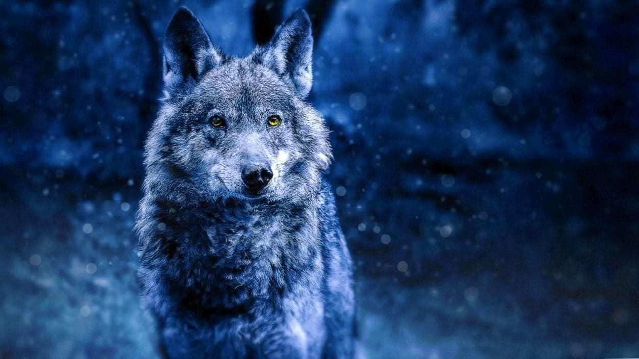 Wolf PS3 Wallpapers