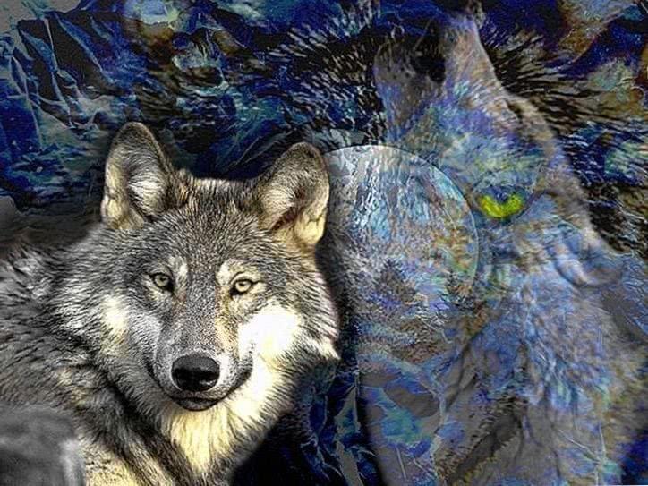 Wolf Mond Nacht Natur Wallpapers
