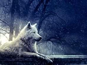 Pretty Wolf Wallpapers
