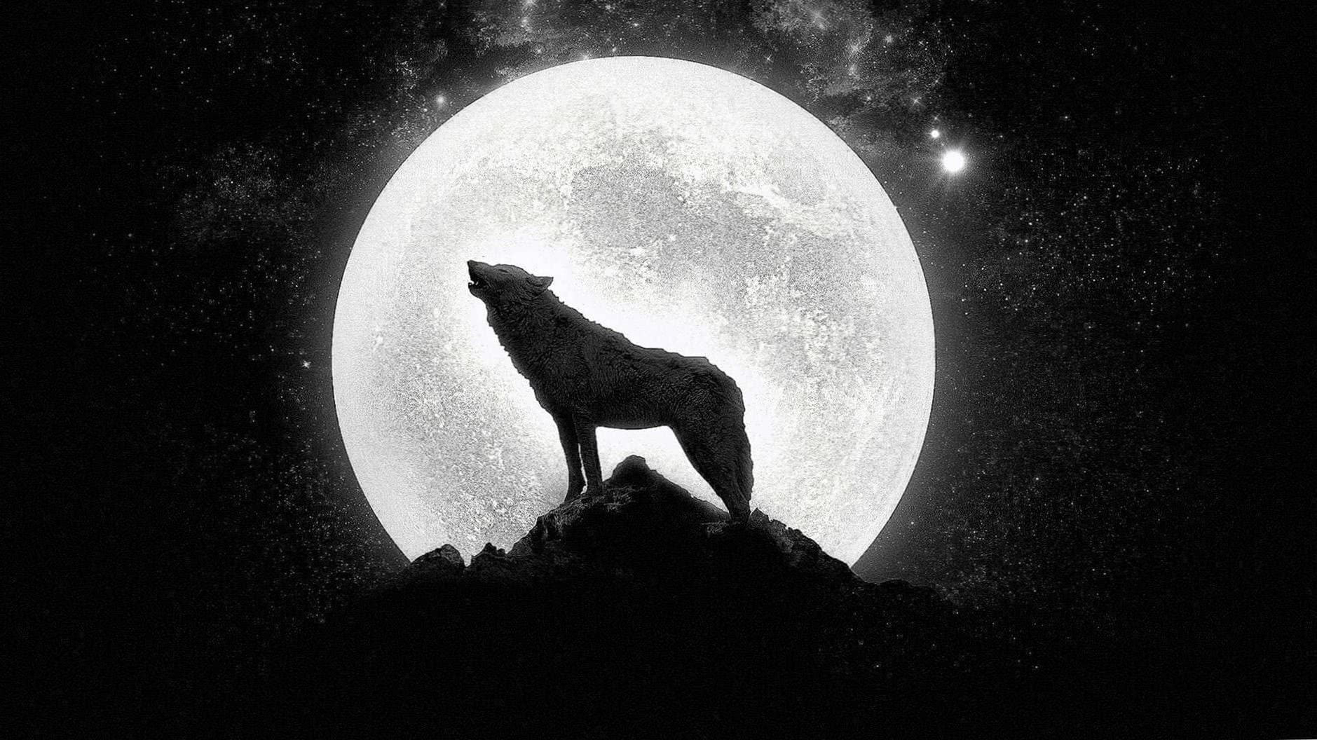 Howling Wolf HD Wallpapers