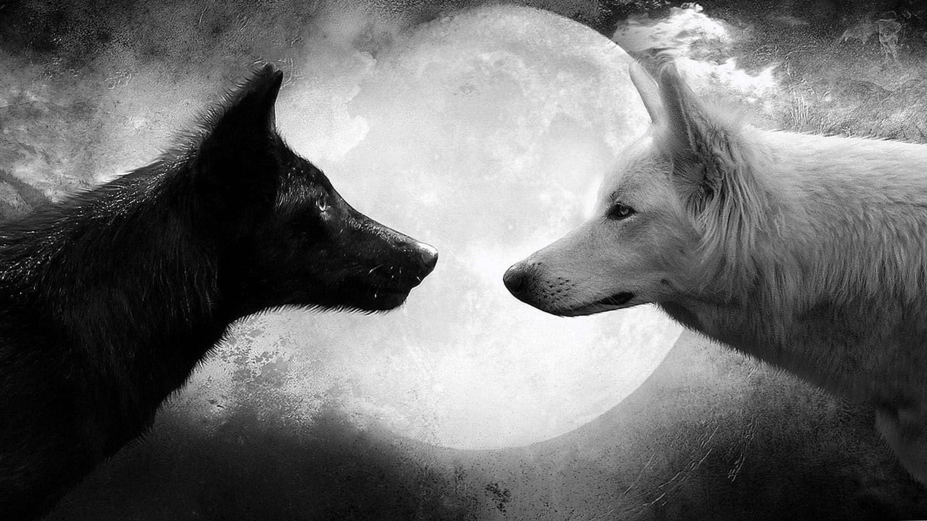 Best Wolf Wallpapers HD