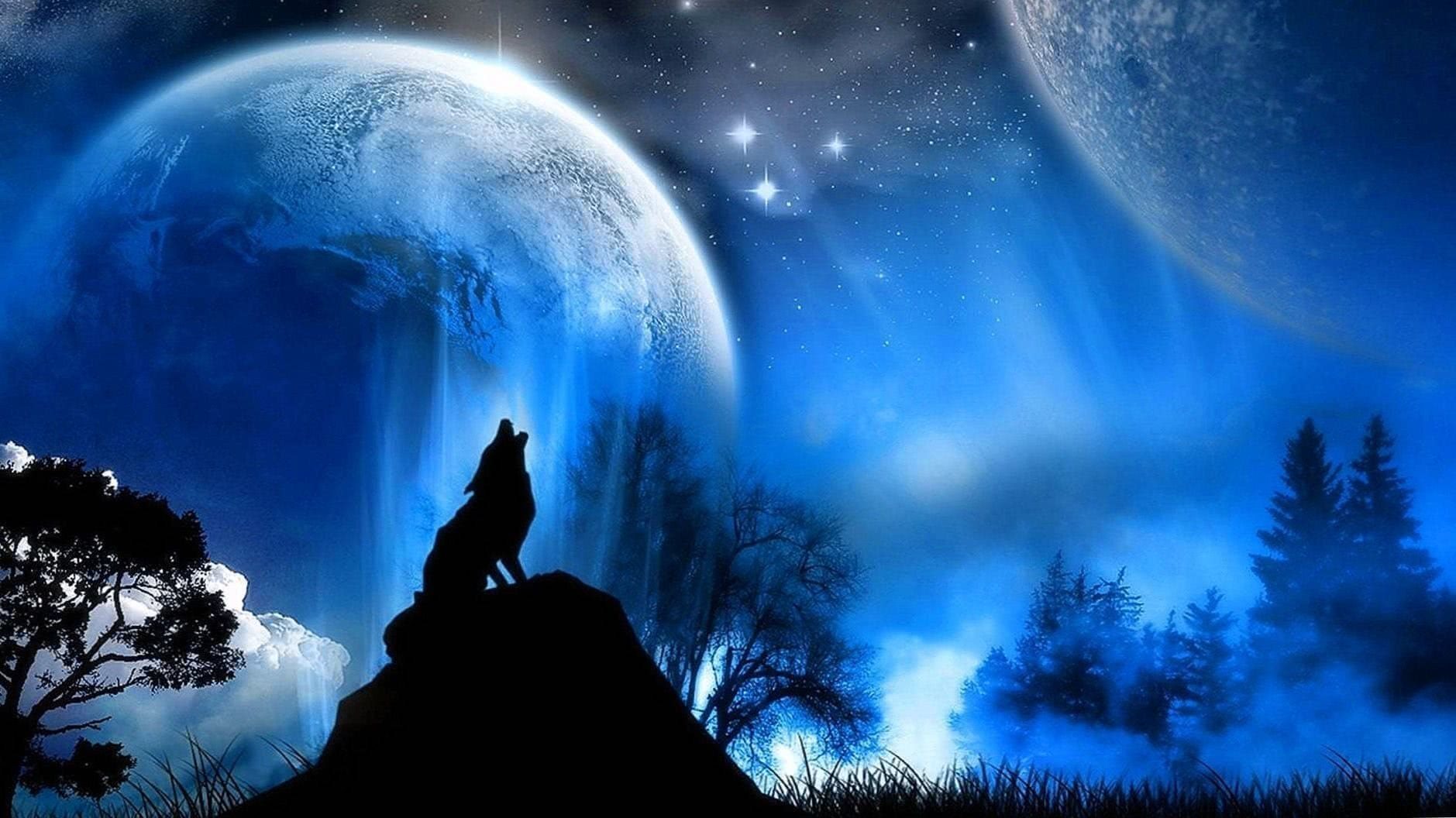Black Wolf Wallpapers HD 1080p