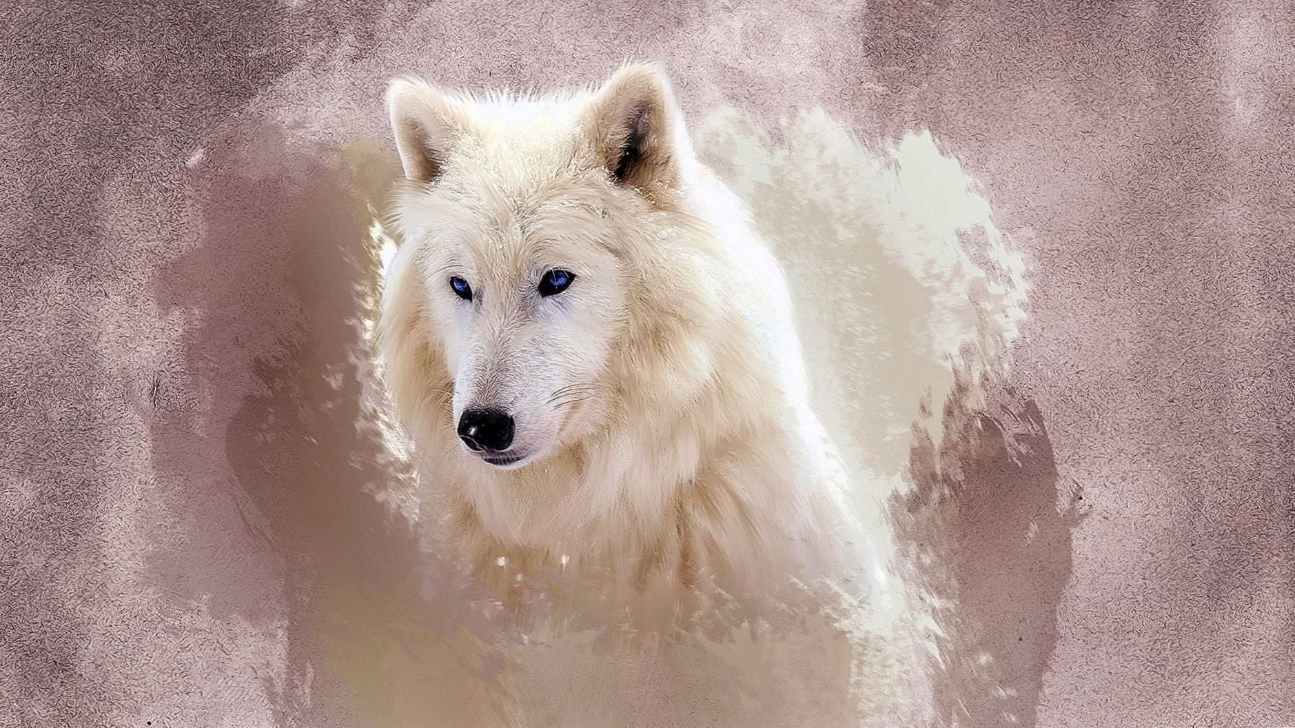 The Wolf Wallpapers HD