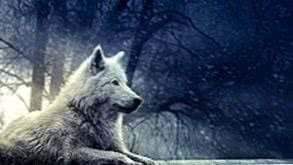 Wolf Wallpapers Full HD
