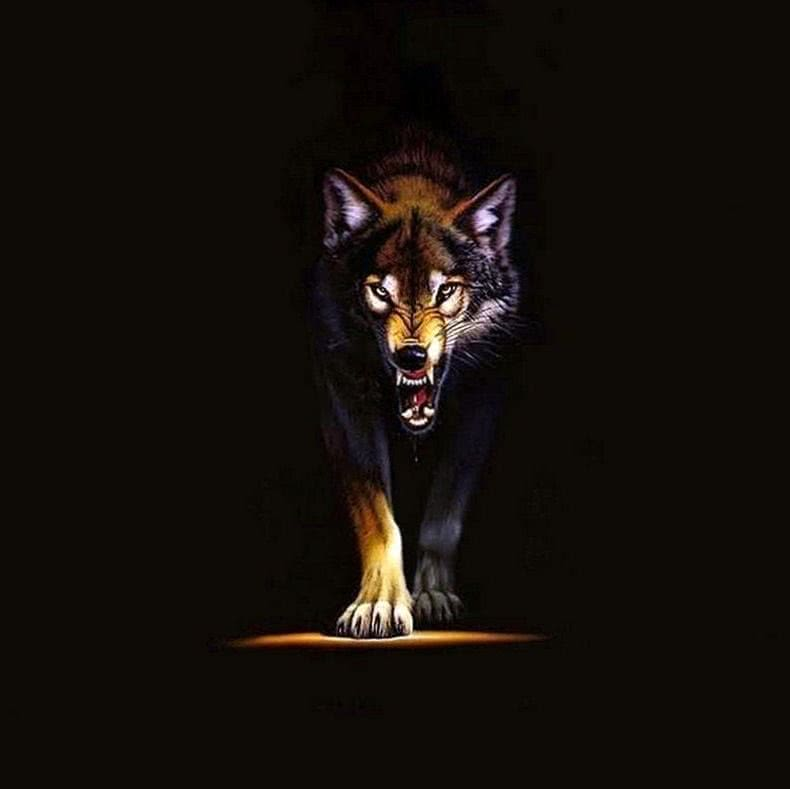 Angry Wolf Hd Wallpapers 1080p Wolf Wallpaperspro