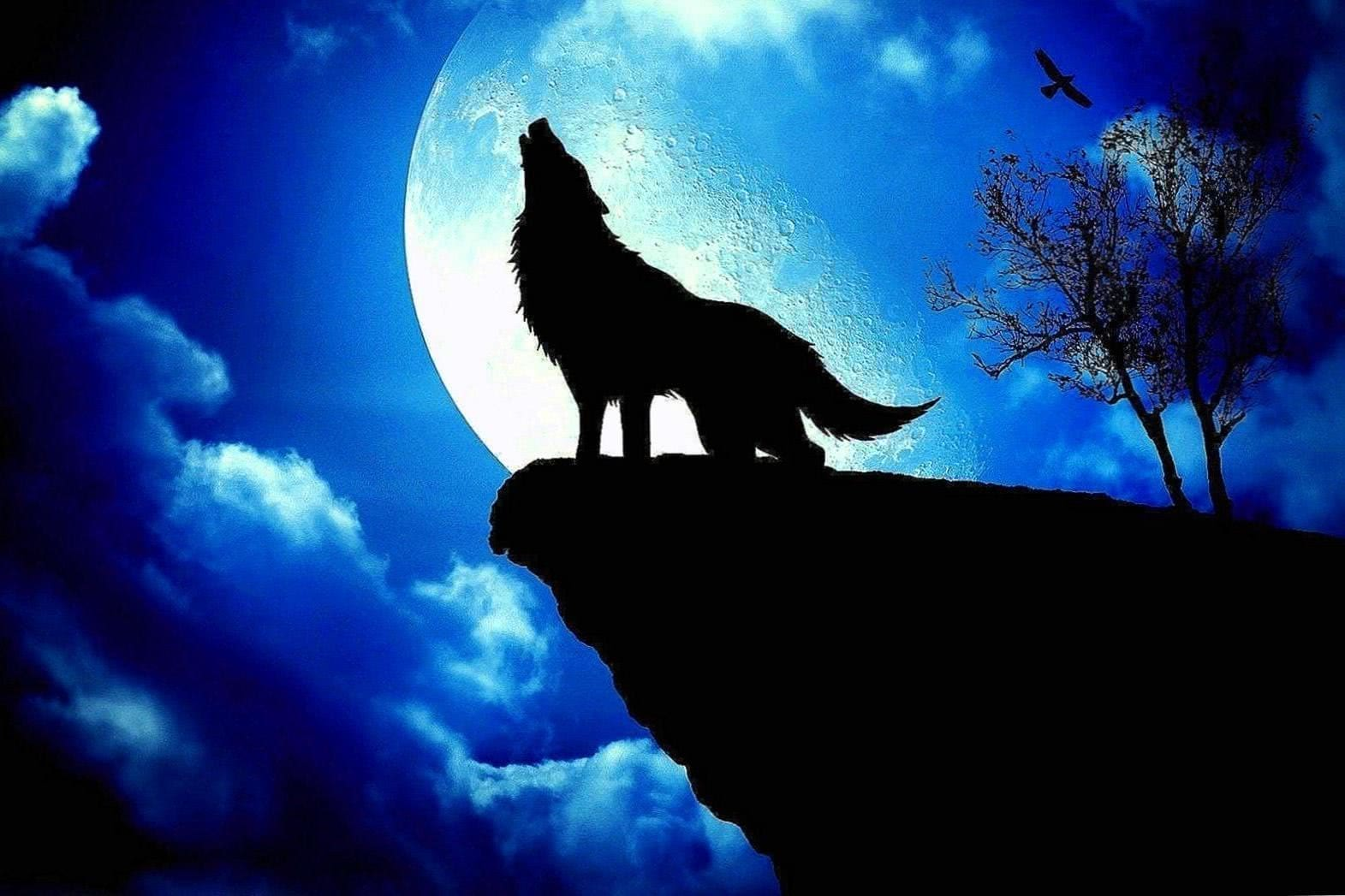 Wolf And Moon Wallpapers