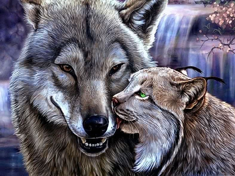 Kostenlose Wallpapers Wolf