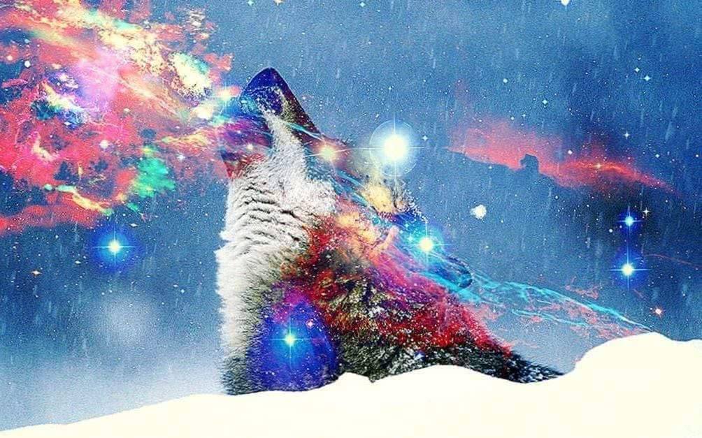 Hipster Wolf Wallpapers HD