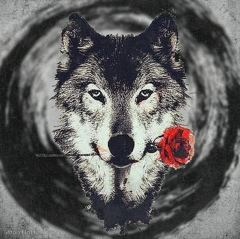 Rose Wolf Wallpapers