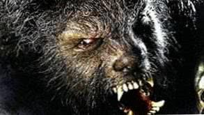 Horror Wolf HD Wallpapers