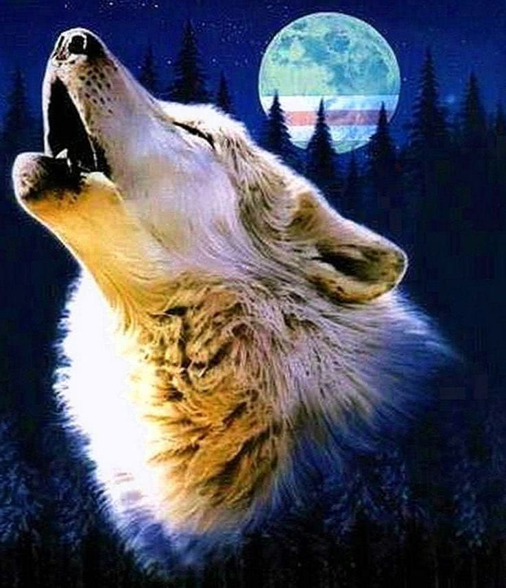 Wolf Howling Wallpaper For Mobile