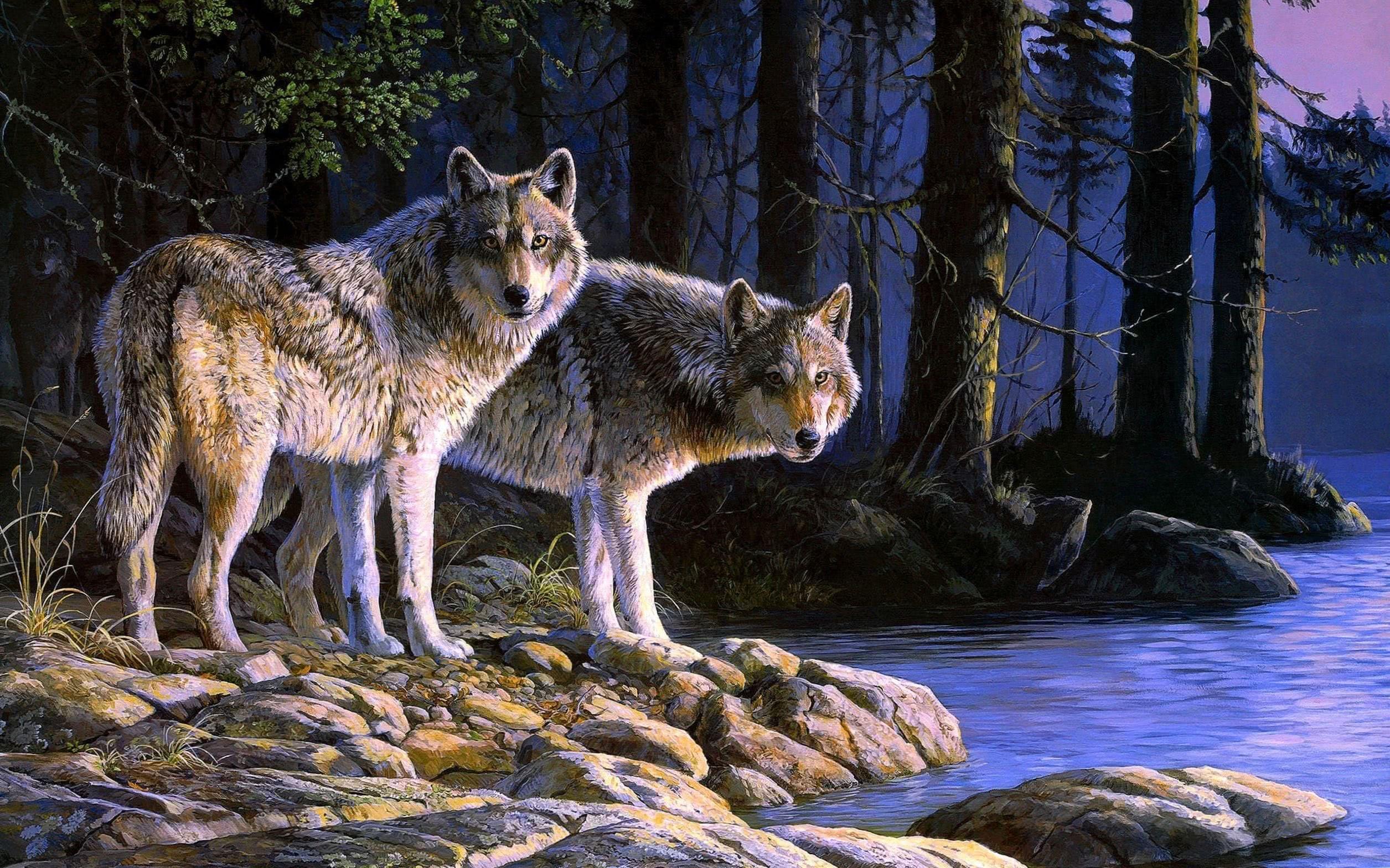 Wolf Mond Nacht Natur Wallpaper