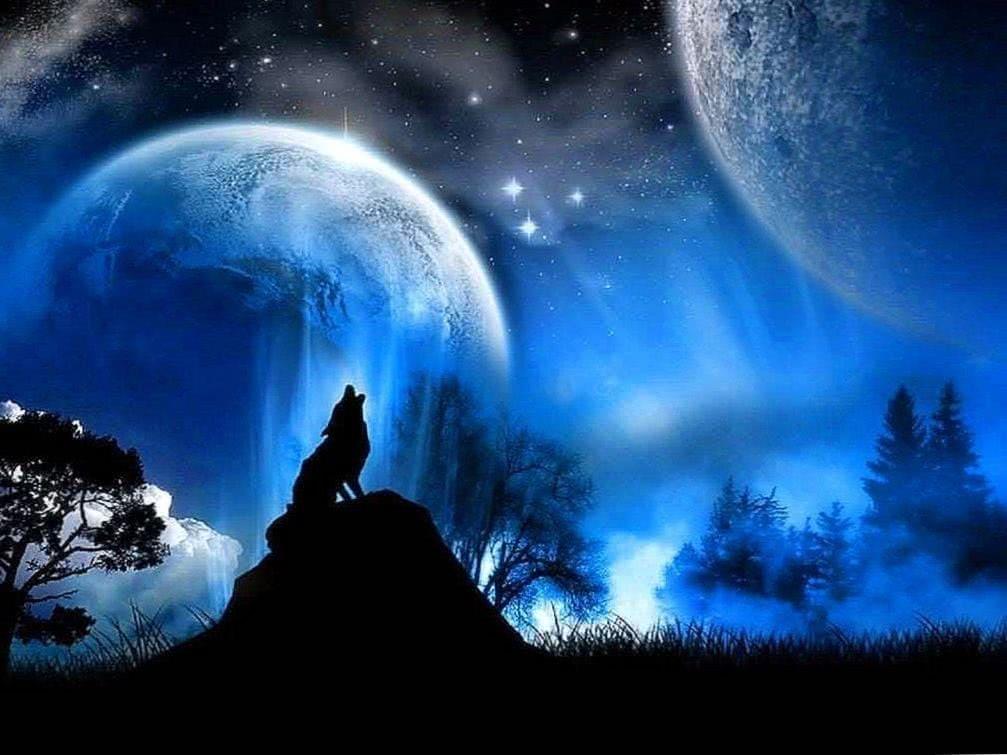 Black Wolf Howling Wallpaper