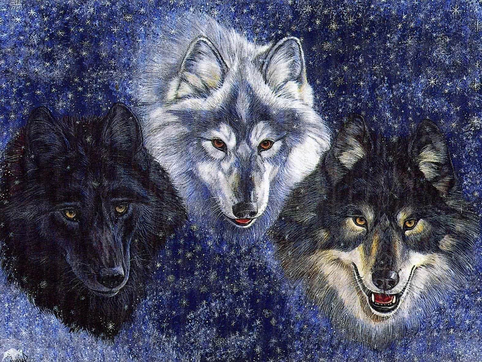 Wolf Images Wallpaper