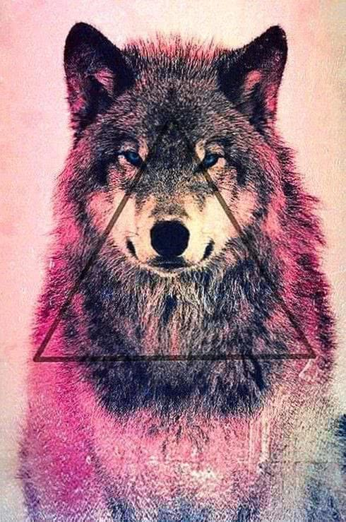 Cute Wolf Wallpaper For iPhone