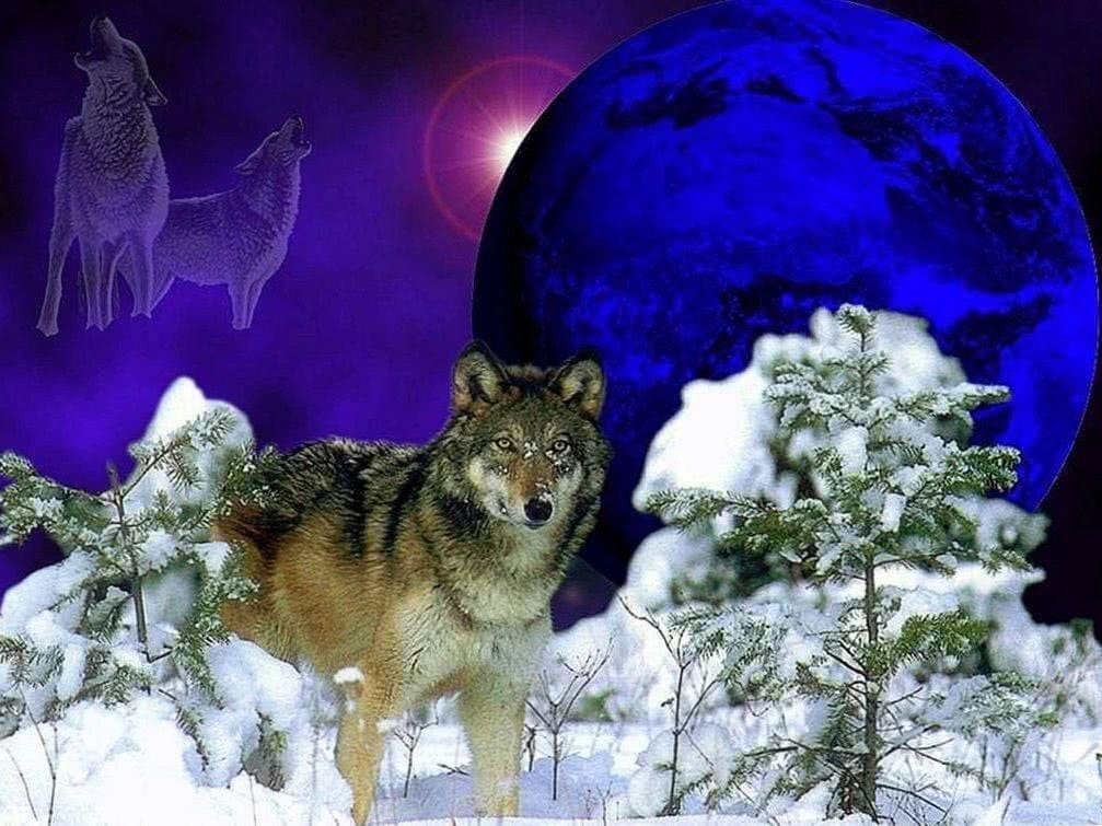 Wolf Winter Wallpaper